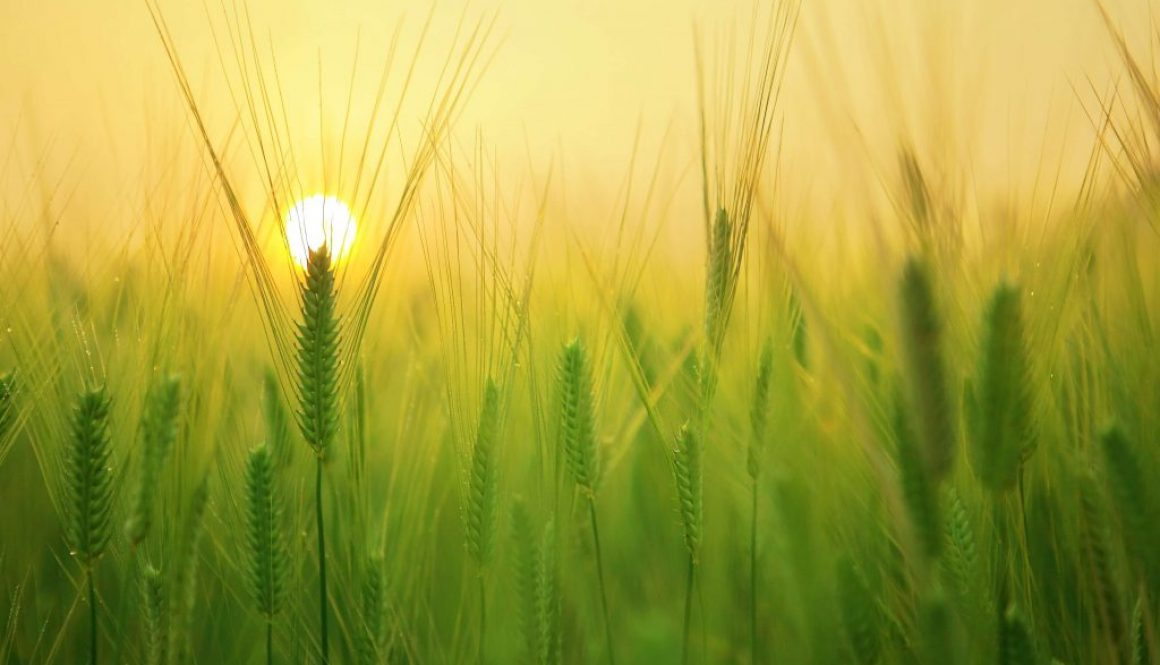 senzori IoT agricultura sustenabila precizie