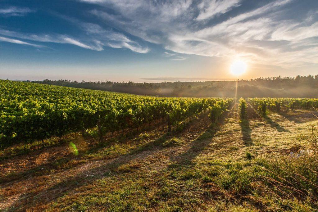 solutia teraseya agricultura inteligenta jidvei